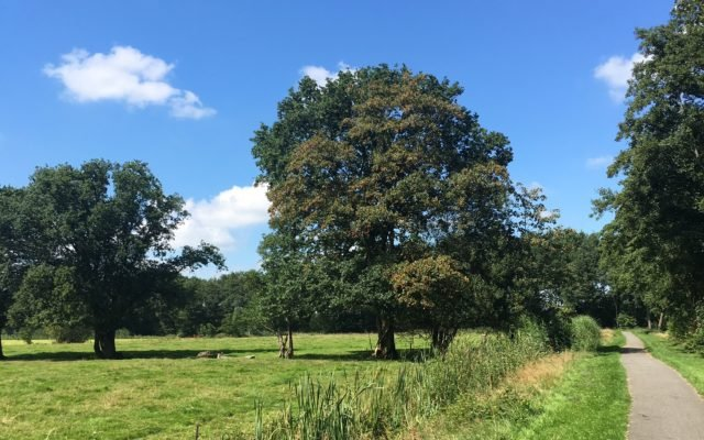 Road to Disney… Hardlopen in Oranjewoud!